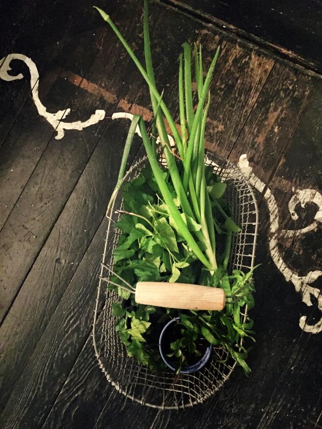 Maggikraut, Liebstöckel, Kräuterküche, Gartenblog, Rezepte, Gartenrezepte, Past mit Giersch, Gierschrezepte, Giersch-Pasta