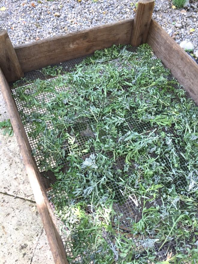 Wermut, Pflanzenschutz, biologisch
