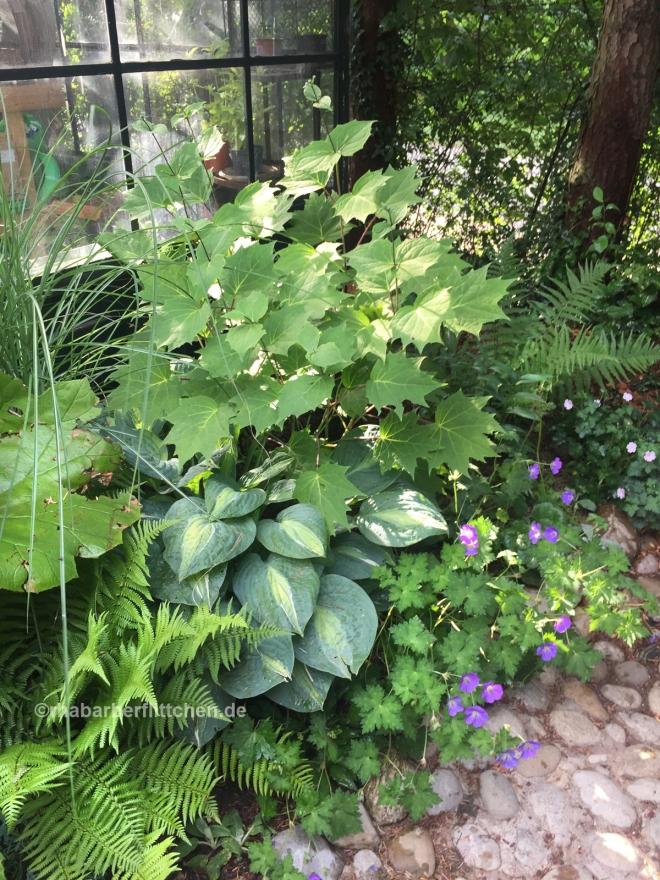 webKiespflaster-Eingang-Wachsglockenblume