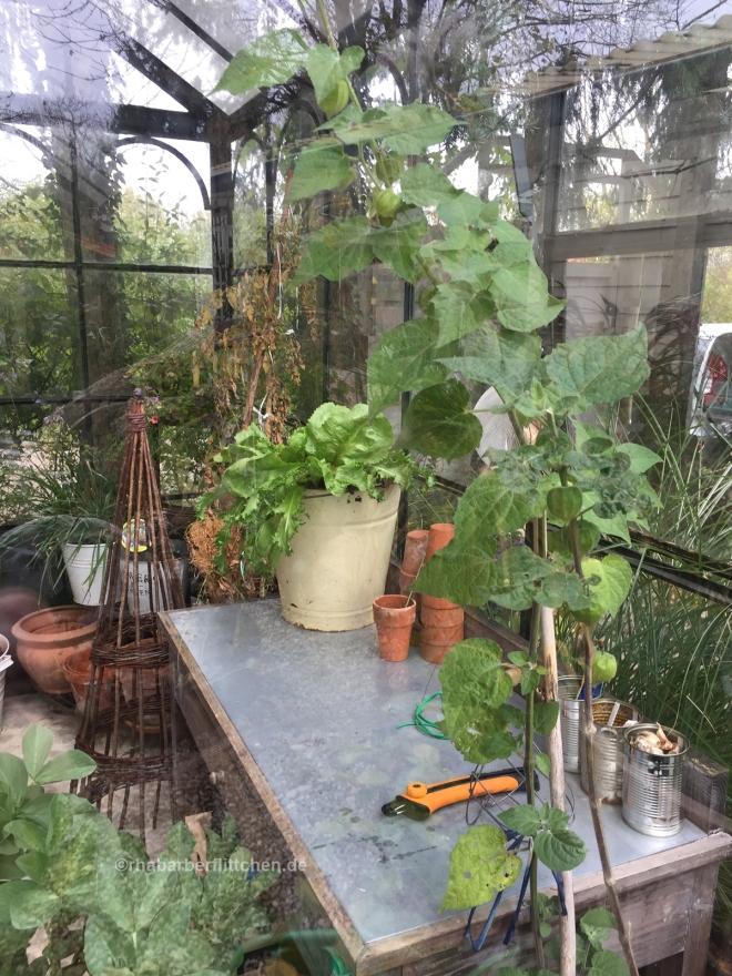 webromantisch-Gewächshaus-Pflanztisch